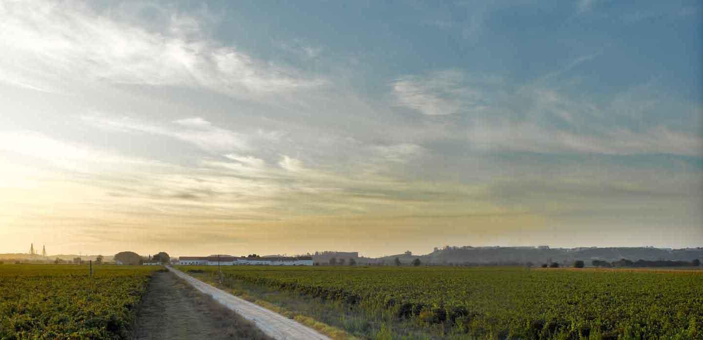 Quinta do Casal Monteiro vineyard