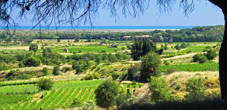 Van Ravenzwaaij Wine Languedoc Les Vignobles Foncalieu