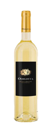 Quinta do Frances Odelouca Branco