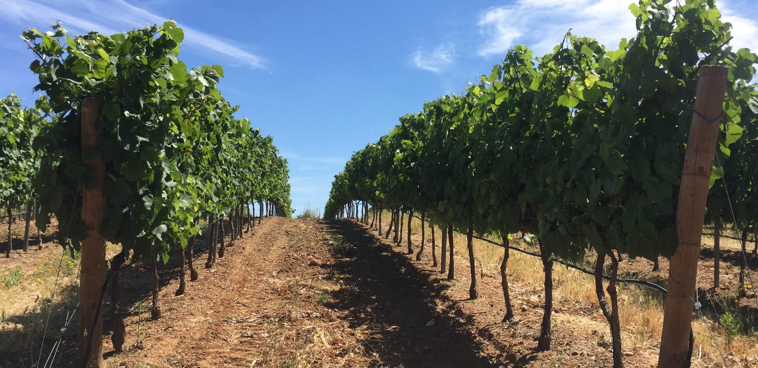 Herdade do Freixo Vineyards