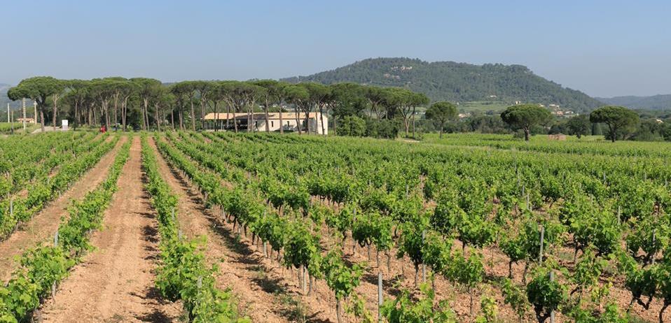 Domaine des Feraud vineyards