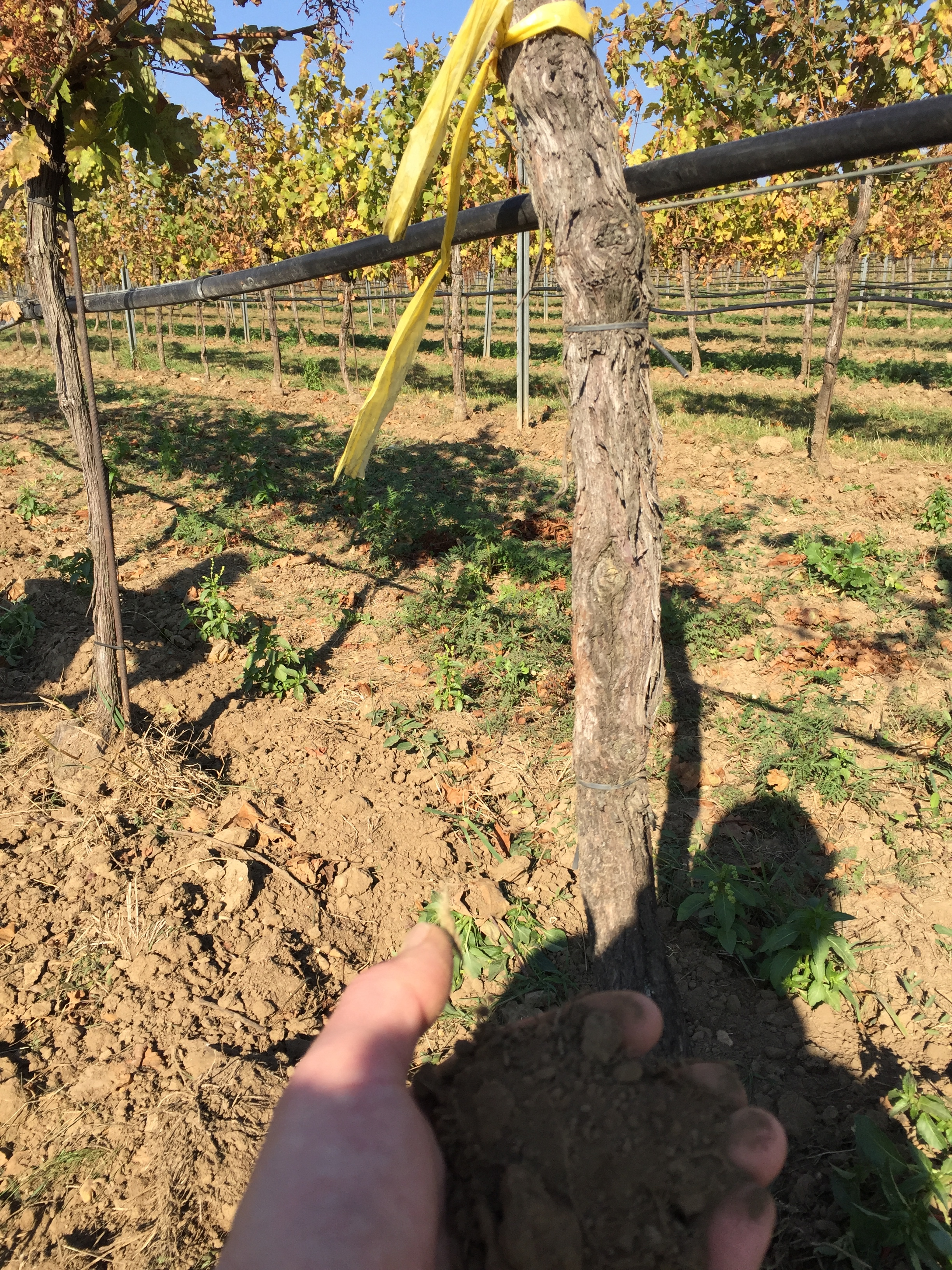 Weingut Mittelbach Rosshimmel soil