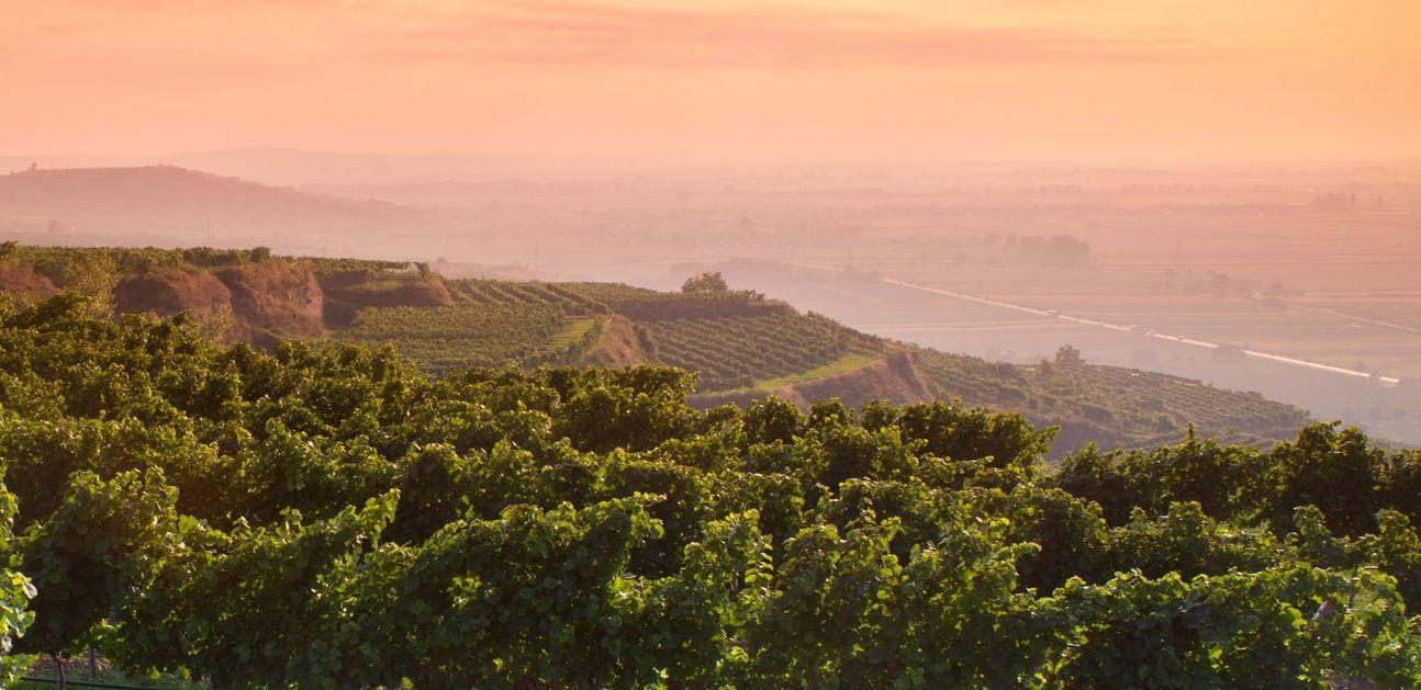 Weingut Mittelbach lage view
