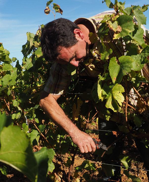 Domaine Bourdon Vines